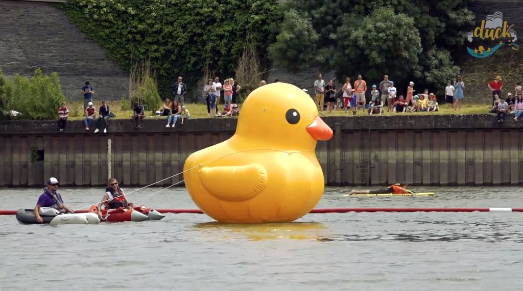 duck race angers