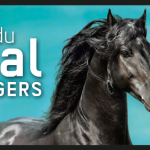 salon du cheval à angers